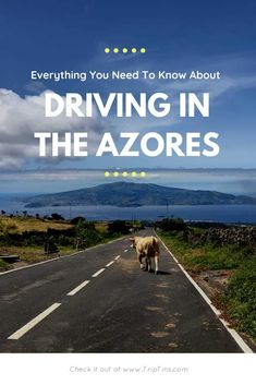 Driving in the Azores -  A Guide to Car Rentals & More