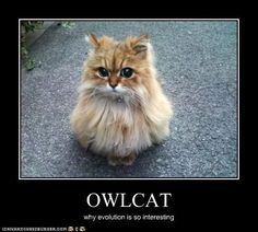 funny-pictures-cat-looks-like-an-owl.jpg - http://ebooks2buy.biz/go/FunnyJokes.php