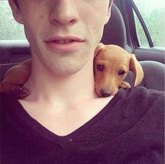 fofura wiener-dog-cachorro