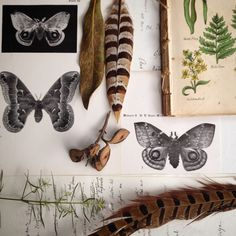 The Naturalist Melbourne Collections...