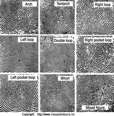 Fingerprint Science Project for Kids