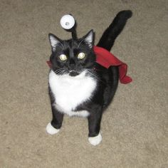 Nibbler in cat form. Animal cosplay. Awesome.  #futurama #nibblonian #pets - I AM DOING THIS TO TEX