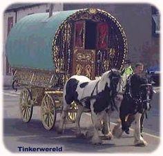 Big Sky Gypsy and Drum Horses, Gypsy Vanner, Gypsy Horses, Gypsy Cob, ...    bigskygypsy.com