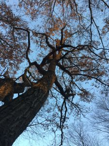 Druid Tree Workings: Establishing Deep Connections with Trees