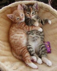 No, Sissy, stay here!