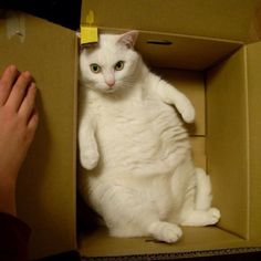 hey...this is my box... #showmecats #thefunny