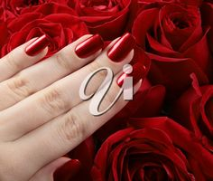 Red metallic manicure over the roses background. Rose Background, Royalty Free Images, Manicure, Metallic, Roses, Nail Bar, Pink, Copyright Free Images, Nail Manicure