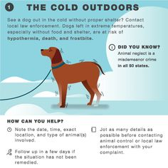Battling Frigid Temps and Icy Conditions? Our Cold Weather Infographic Will Help!