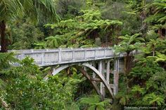 You see, this one was never connected to anything! The bridge was built across the Mangapurua stream to allow access to newly created farmland after World War I. However unfortunately, the land proved to be too isolated and difficult to get to, so the planned roads that were going to link the bridge to somewhere were never built. Now, the only way to reach the bridge is by boat or kayak, followed by a 45-minute walk through the bush.