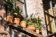 Geen plaats meer voor planten? Kijk eens naar buiten, op je vensterbank is er vast nog plaats. Hoog tijd voor een funky venstertuintje.