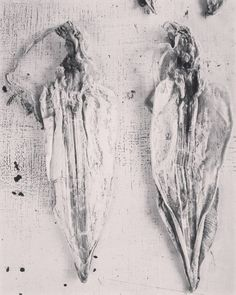 #squid #Seafood #market #bw #blackandwhite #blancoynegro #blackandwhitephotography #biancoenero #viaggio #viajes #vietnam #portrait #hanoi #travelpics #fineart #minimal #instalike #i #instart #instagram #travel #travelpics #artphotography #art