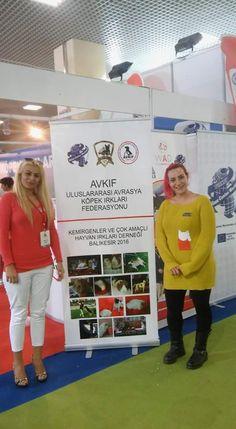 ALIANZ TURKEY 2016 GUINEA PIG CHAPIONSHIP ISTANBUL-TURKEY
