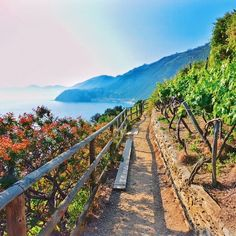 Strolling through the gardens and vineyards atop the hills of Cinque Terre.