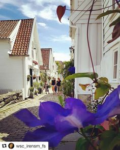 Det blomstrer i Stavanger. #reiseliv #reisetips #reiseblogger #reiseråd  #Repost @wsc_irensm_fs (@get_repost)  God morgen da ble det litt bedre vær idag  Stavanger Norway #nrksommer #houses_ofthe_world
