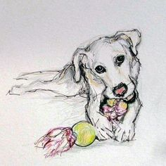 Pet Portrait Sketches by Julie Pfirsch Yellow Lab Mix - Mosby Pencil, colored pencil and ink on white paper www.juliepfirsch.com