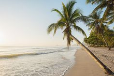 Morning at the tropical beach with coconut tree plam