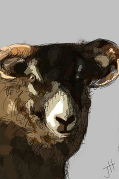 A sheep in the Peaks by thejanehorton, via Flickr