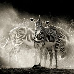 / Safari by Marina Cano Zebra Pictures, Animal Pictures, Wildlife Photography, Animal Photography, Inspiring Photography, White Photography, Safari Animals, Cute Animals, South Africa Wildlife