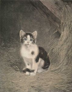 Cats in Art and Illustration: Julius Adam II (1852-1913 German) - Black and White Kitten