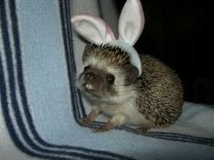 Easter Hedgehog ~ awwww