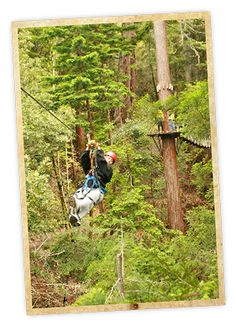 Zip through the Redwood forest canopy with Sonoma Canopy Tours in Occidental, Sonoma County, California.