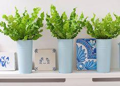 アビス 観葉植物は種類も豊富で、姿かたちも個性的なものが多くあります。一鉢お部屋に置くだけで、雰囲気をがらりとかえてしまうこともある、インテリアとしても欠かせないアイテム。風水でも運気を変えることから積極的に取り入れられています。インテリアとして取り入れやすい観葉植物をご紹介していきましょう。