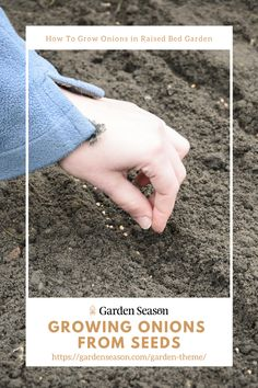 How To Grow Onions In Your Raise Bed Garden | Growing From Seeds | Sow generously so you can transplant your seedlings to areas where germination was poor and sparse. You can sow different varieties, so the best ones will fill the void for the poorly germinated. Easy Garden, Edible Garden, Raised Garden Beds, Raised Beds, Growing Onions, Easy Vegetables To Grow, Garden Theme, Garden Projects, Fill