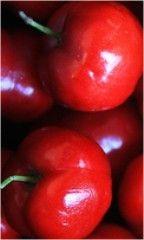 Acerolo. características, procedencia, contenido y principios activos de la Acerola.  Propiedades de la acerola. Preparación y posología. http://www.plantas-medicinal-farmacognosia.com/productos-naturales/acerolo-acerola/
