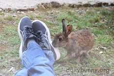 Wild bunny finds human's shoes very interesting - September 28, 2016