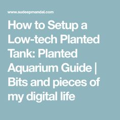 How to Setup a Low-tech Planted Tank: Planted Aquarium Guide   Bits and pieces of my digital life