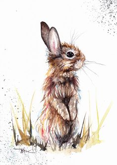 Original Watercolour Painting by Be Coventry,Animals,Realism,Rabbit
