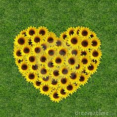 Photo about Sunflowers in a heart shape on a grass background. Image of yellow, valentine, seasonal - 7932144 Heart In Nature, Heart Art, Sunflowers And Daisies, Yellow Flowers, Sun Flowers, Happy Flowers, Beautiful Flowers, My Flower, Flower Power