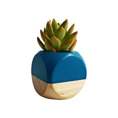 Colorblocked Succulent Planter in Teal and Wood - Dot & Bo