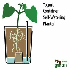 The DIY Self-watering Herb Garden for Apartment Dwellers