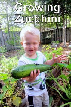 The Educators' Spin On It: ALL about Growing ZUCCHINI. Blog includes videos, links to info for freezing, recipes, pollinating zucchini, and more ...