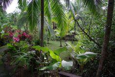 gardens @ www.mytropicalhut.com
