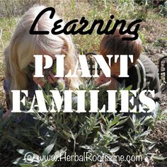 Learning Plant Families