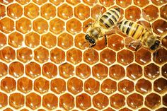 How to Raise Honey Bees   How To Be A Successful Beekeeper, check it out at http://survivallife.com/how-to-raise-honey-bees/