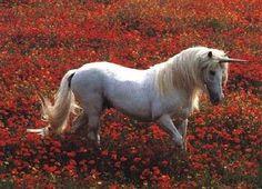 robert vauvra unicorns   Robert Vavra (c) 32