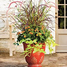 Purple Fountain Grass, 'Fireworks' Gomphrena, 'Bandana Red' Lantanas and 'Margarita' Sweet Potato Vines ~ Spectacular Container Gardening Ideas Fall Planters, Garden Planters, Container Plants, Container Gardening, Container Flowers, Vegetable Gardening, Fountain Grass, Fall Containers, Succulent Containers