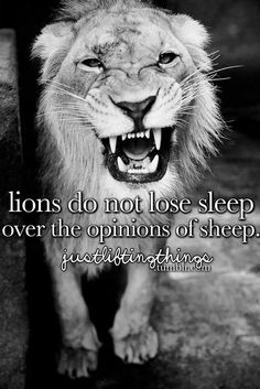 Lions do not lose sleep over bullshit.I mean over the opinions of sheep Lion Quotes, Cute Quotes, Great Quotes, Funny Quotes, Inspirational Quotes, Random Quotes, Sarcastic Quotes, Qoutes, Lions Dont Lose Sleep