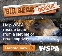 World Animal Protection World Animal Protection, Donate Now, Big Bear, Animal Rights, Teddy Bears, Animal Pictures, Beautiful People, Earth, Dog