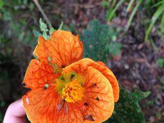 Random flower!!