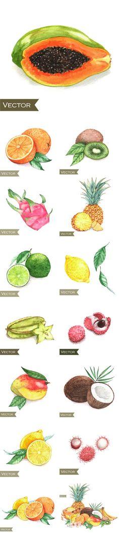 Hand drawn watercolor exotic fruits vector set EPS | JPG | 109 MB