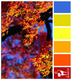 Autumn in Japan: Blue, Lime green, Yellow, Orange, Red - Designcat Colour Inspiration Pallet