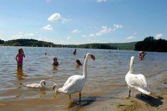 Le lac du Malsaucy