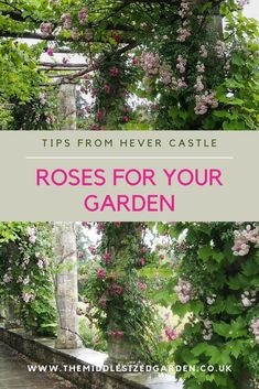 Expert rose growing tips from the beautiful rose gardens at Hever Castle. #gardening #roses #middlesizedgarden #backyard Low Maintenance Garden Design, Buy Plants Online, Herbaceous Border, Plant Identification, Growing Roses, David Austin Roses, Yellow Leaves, Climbing Roses, Colorful Garden