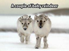 Aww love reindeer ♥