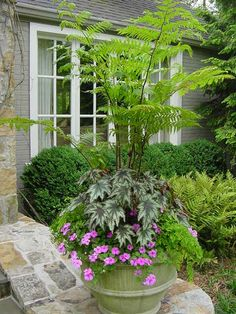 Australian Tree Fern with Begonia - - photographed by Heather Moll-Dunn Landscape and Garden Designer on the Gardens for Connoisseurs Tour around Atlanta