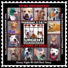 """7/14 SUPER URGENT Please Share! SUPER URGENT BEAUTIFUL LIVES OF DOGS TO SAVE 7/14 TO BE DESTROYED STARTING 12NOON PLEASE SAVE US WE ONLY HAVE A FEW MINS / HOURS TO LIVE BEFORE WE GO TO DOGGY HEAVEN THANK YOU PLEASE REPIN AND SHARE THIS INFORMATION  TIME IS CRITICAL THANK YOU IRISH : . Please share! The shelter closes at 8pm. Go to the ACC website( http:/www.nycacc.org/PublicAtRisk.htm) ASAP to adopt a PUBLIC LIST dog (noted with a """"P"""" on their profile) and/or work with a rescue group if you…"""